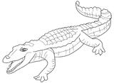 Imprimer le coloriage : Reptiles, numéro 25797
