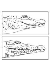 Imprimer le coloriage : Reptiles, numéro 296847