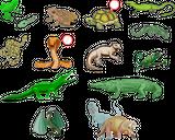 Imprimer le dessin en couleurs : Reptiles, numéro 40309