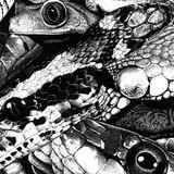 Imprimer le coloriage : Reptiles, numéro 64793