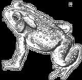 Imprimer le coloriage : Reptiles, numéro 64799