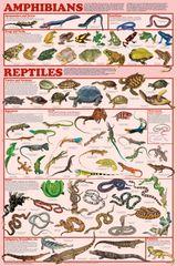 Imprimer le dessin en couleurs : Reptiles, numéro 74209