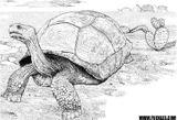 Imprimer le coloriage : Reptiles, numéro 755721