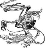 Imprimer le coloriage : Reptiles, numéro 760183