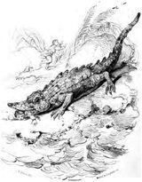 Imprimer le coloriage : Crocodile, numéro 24002
