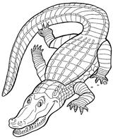 Imprimer le coloriage : Crocodile, numéro 25803