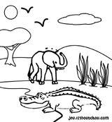 Imprimer le coloriage : Crocodile, numéro 25811