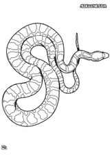 Imprimer le coloriage : Serpent, numéro 17517535