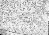 Imprimer le coloriage : Serpent, numéro 359475