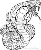 Imprimer le coloriage : Serpent, numéro 425324