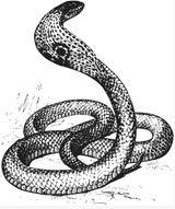 Imprimer le coloriage : Serpent, numéro 456520