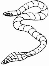 Imprimer le coloriage : Serpent, numéro 56073