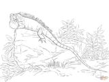 Imprimer le coloriage : Reptiles, numéro b4fcd320