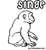 Imprimer le coloriage : Singe, numéro 125333