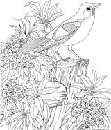 Imprimer le coloriage : Nature, numéro 3e3032d5