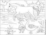 Imprimer le coloriage : Nature, numéro 4819