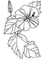 Imprimer le coloriage : Nature, numéro 4821