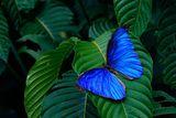Imprimer le dessin en couleurs : Nature, numéro 69095