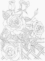 Imprimer le coloriage : Nature, numéro 759714