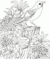 Imprimer le coloriage : Nature, numéro 8b77ed17
