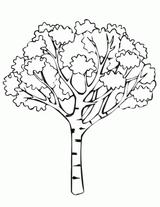 Imprimer le dessin en couleurs : Arbres, numéro 11820