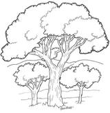 Imprimer le coloriage : Arbres, numéro 129158