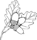 Imprimer le coloriage : Arbres, numéro 6974