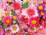 Imprimer le dessin en couleurs : Fleurs, numéro 118040