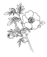 Imprimer le coloriage : Fleurs, numéro 129199