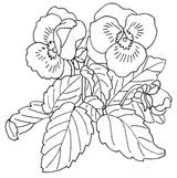 Imprimer le coloriage : Fleurs, numéro 146410