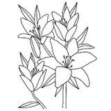 Imprimer le coloriage : Fleurs, numéro 3136