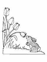 Imprimer le coloriage : Fleurs, numéro 3155