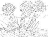 Imprimer le coloriage : Fleurs, numéro 5d555732