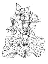 Imprimer le coloriage : Fleurs, numéro 62402