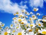 Imprimer le dessin en couleurs : Fleurs, numéro 683522