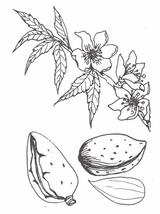 Imprimer le dessin en couleurs : Fruits, numéro 476752