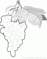 Imprimer le dessin en couleurs : Fruits, numéro 476753