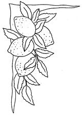 Coloriages imprimer citron page 1 - Coloriage citron ...