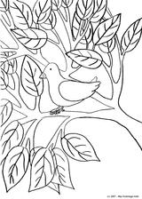 Imprimer le coloriage : Framboise numéro 28241