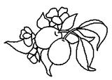 Imprimer le coloriage : Prune, numéro 24369