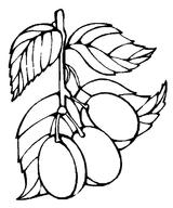Imprimer le coloriage : Prune numéro 26063