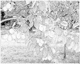 Imprimer le coloriage : Prune, numéro 65269
