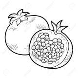 Imprimer le coloriage : Prune, numéro e14f5f29