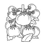 Imprimer le coloriage : Légumes, numéro 14085