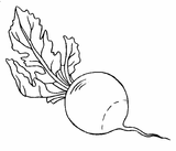 Imprimer le coloriage : Légumes, numéro 355018