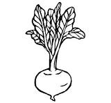 Imprimer le coloriage : Légumes, numéro 8185