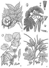 Imprimer le coloriage : Légumes, numéro 8188