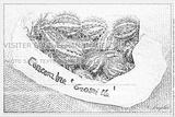 Imprimer le coloriage : Concombre, numéro 426716