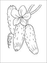 Imprimer le coloriage : Concombre, numéro 56651