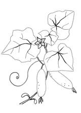 Imprimer le coloriage : Concombre, numéro bd448995